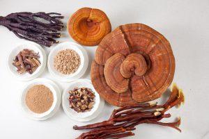 Công dụng của nấm linh chi đối với hệ miễn dịch