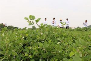 Nguồn nguyên liệu sản xuất thực phẩm chức năng cần được chuẩn bị kỹ lưỡng
