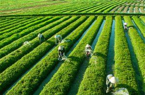 Thực phẩm chức năng sạch có nguồn nguyên liệu đầu vào an toàn